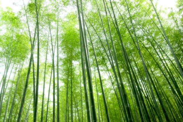竹の酵素について