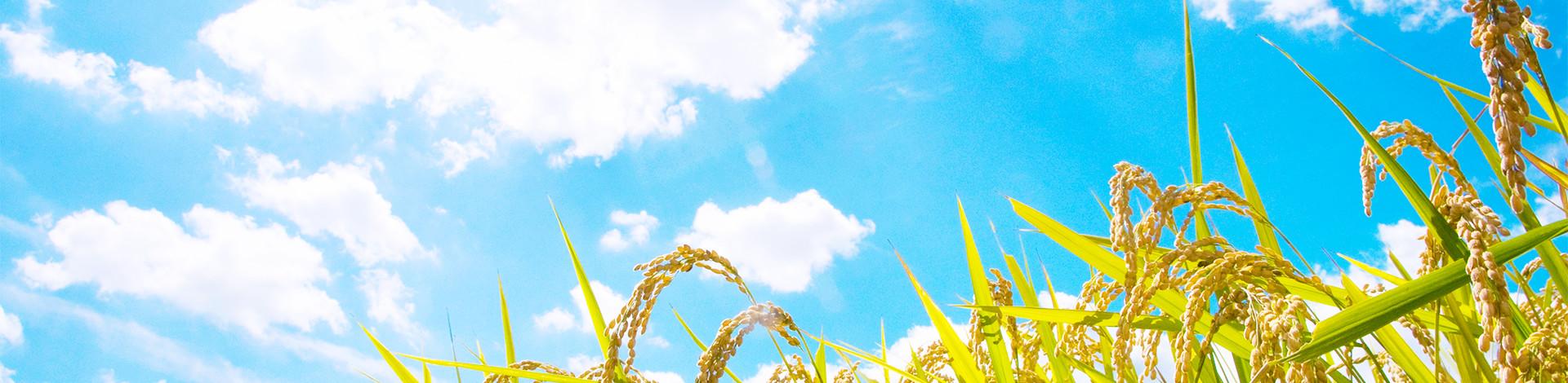 日本古来から愛され続ける竹と米から生まれる酵素のあたたかさ